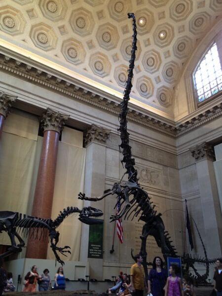 アメリカ自然史博物館 恐竜の化石