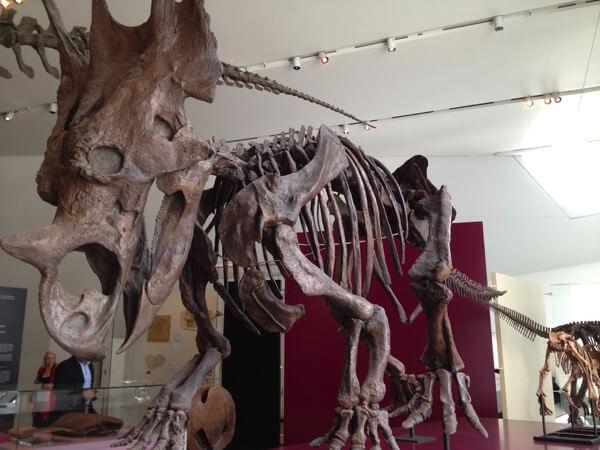 ロイヤル オンタリオ博物館 化石01