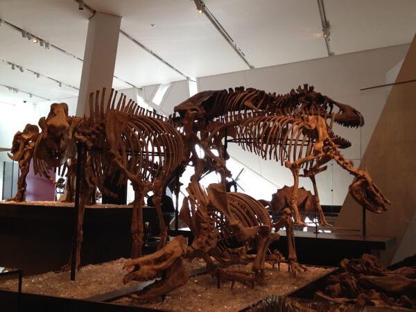 ロイヤル オンタリオ博物館 化石02