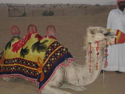 ドバイ砂漠05
