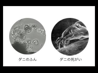 ダニのふん 死がいの浮遊アレル物質を抑える