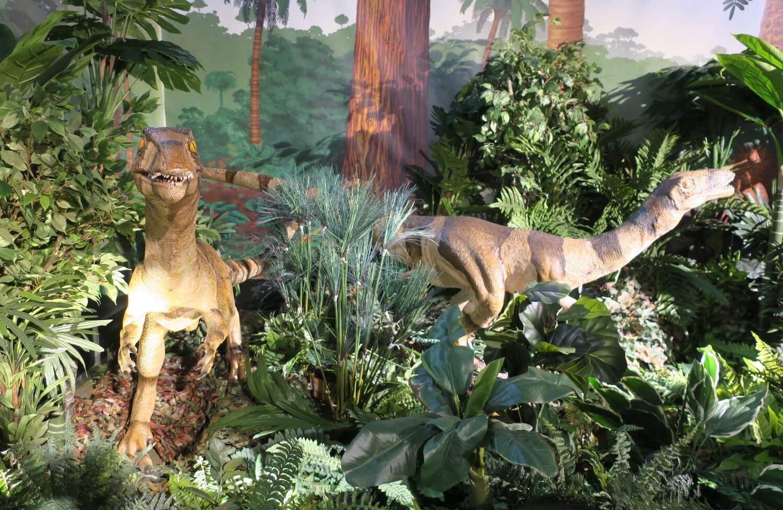 恐竜の森04