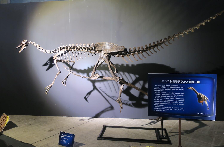 恐竜研究室07