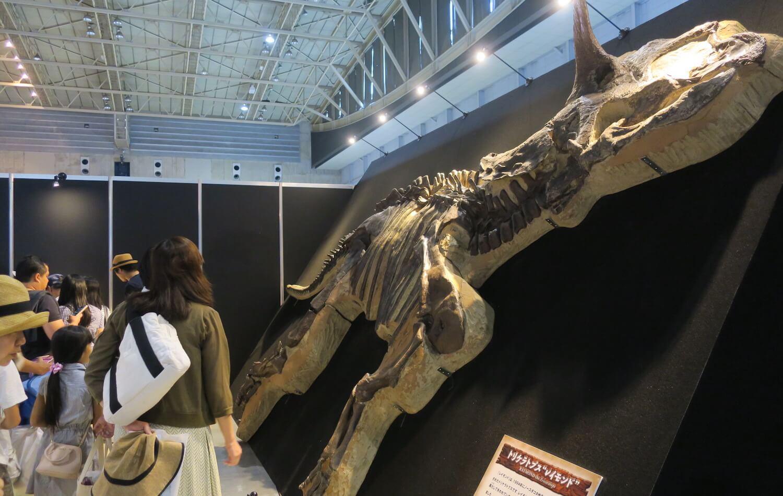 恐竜研究室06