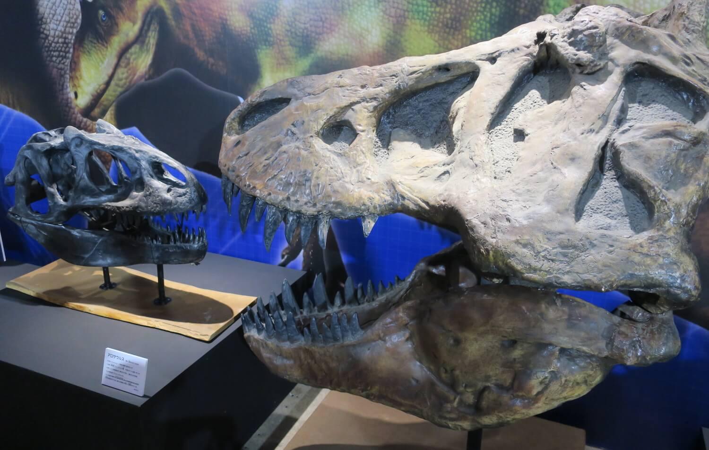 恐竜研究室08