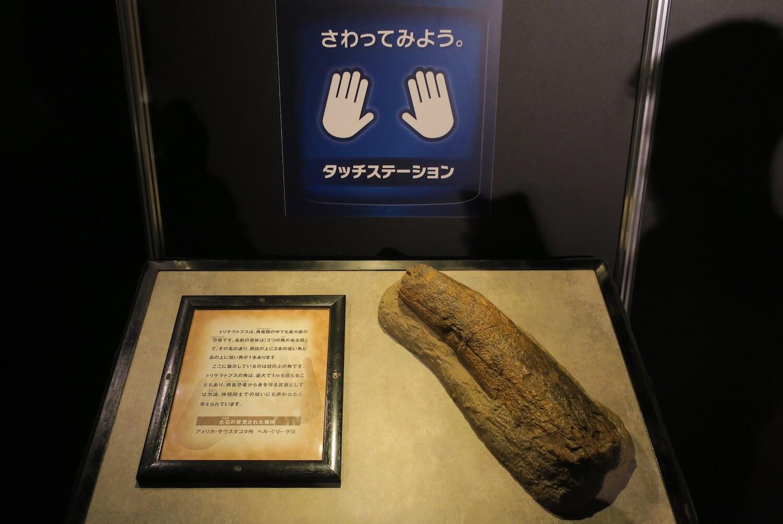 恐竜研究室05