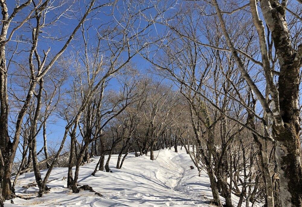 塔ノ岳への道2