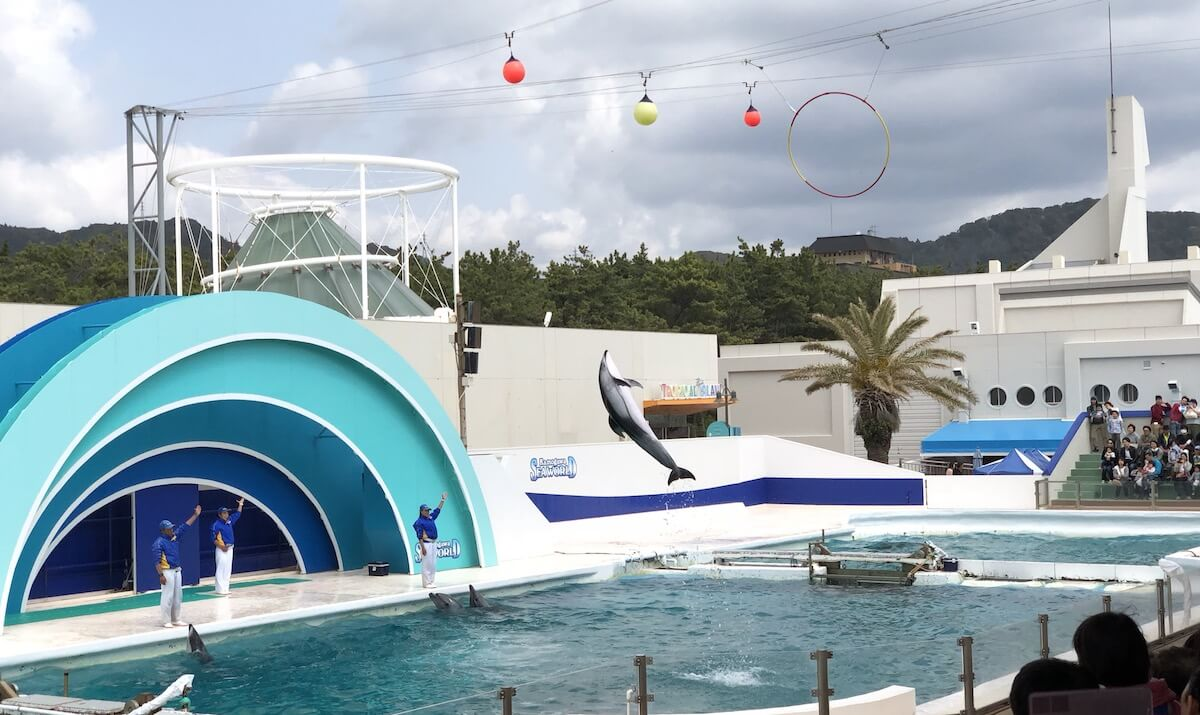 鴨川シーワールド イルカのショー
